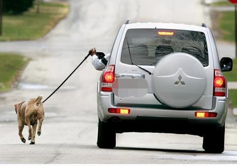 有些遛狗方式,对狗狗伤害很大,有的劝你不要再做了