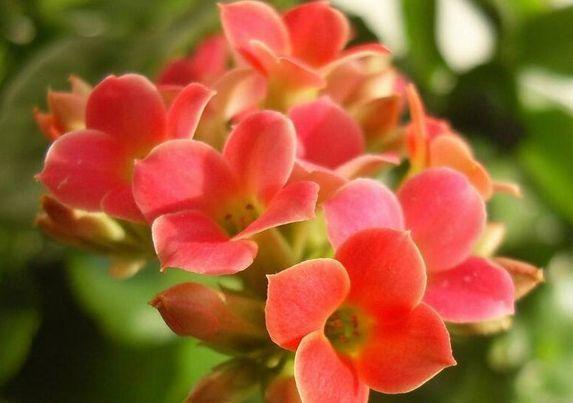 家里必养几种花卉,寓意大吉大利,吉星高照,好运连连