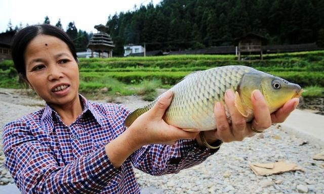 """曾在南方很流行的""""稻田养鱼"""",为何遇冷,这究竟是怎么了?"""