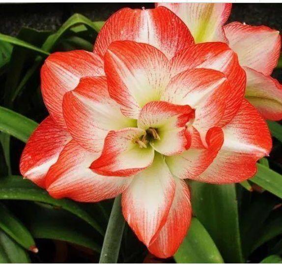 几种花卉养在家里,净化空气还招财,寓意超好的