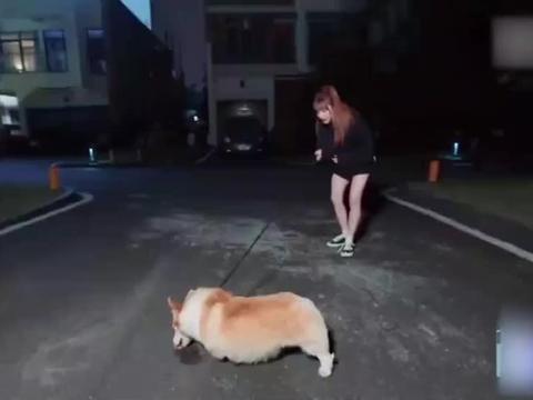"""快来看她的""""遛狗初体验"""",实在是太可爱了!"""