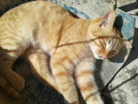 小黄猫躺在簸箕上晒太阳,生活悠闲自在