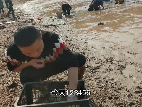 水库巨型大甲鱼泛滥,十几人在泥中疯抢,运气好的抓到几十只