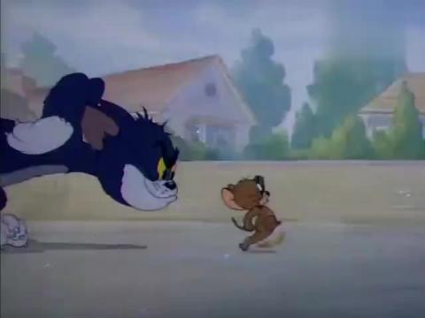 猫和老鼠:汤姆一路紧追着杰瑞,不料进狗狗收容所,吓死汤姆了