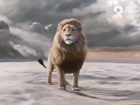 5头雄狮组成的联盟,成为马赛马拉北部的新狮王