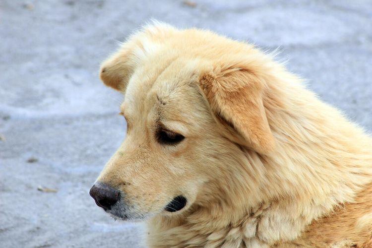 小流浪狗溜进店里取暖,眼神让人不忍驱赶,一块骨头就能让它满足