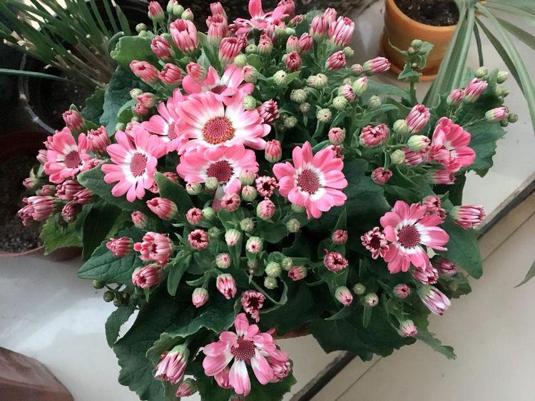 """此1种""""花"""",又美又皮实,花朵艳花期长,1月花正好,开花上百天"""