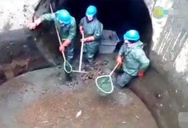 男子清理下水道时发现水里有动静,找来渔网竟收获这种惊喜