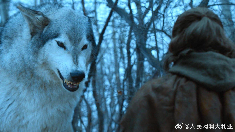澳调查:DNA测序显示《权力的游戏》中的冰原狼是现代狼的远亲