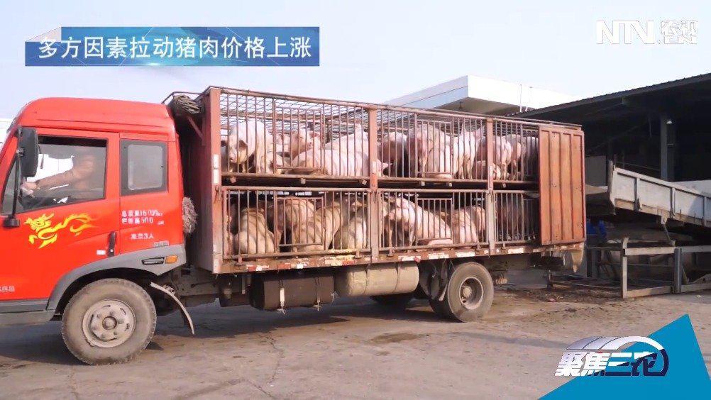"""春节临近,猪肉价格又""""抬头""""!"""
