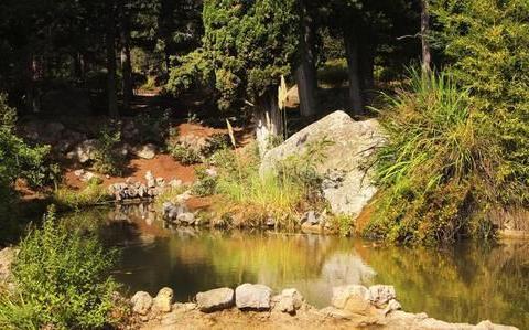农民在山上挖个蓄水池塘,没有放鱼,两年后为何水里有小鱼?