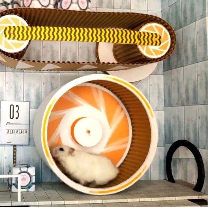聪明可爱的小仓鼠,挑战机关重重的迷宫,这设计有点厉害啊