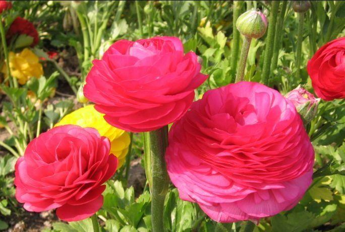 阳台养花,不妨养这4款植物,株型美,开花奇特,见过吗?