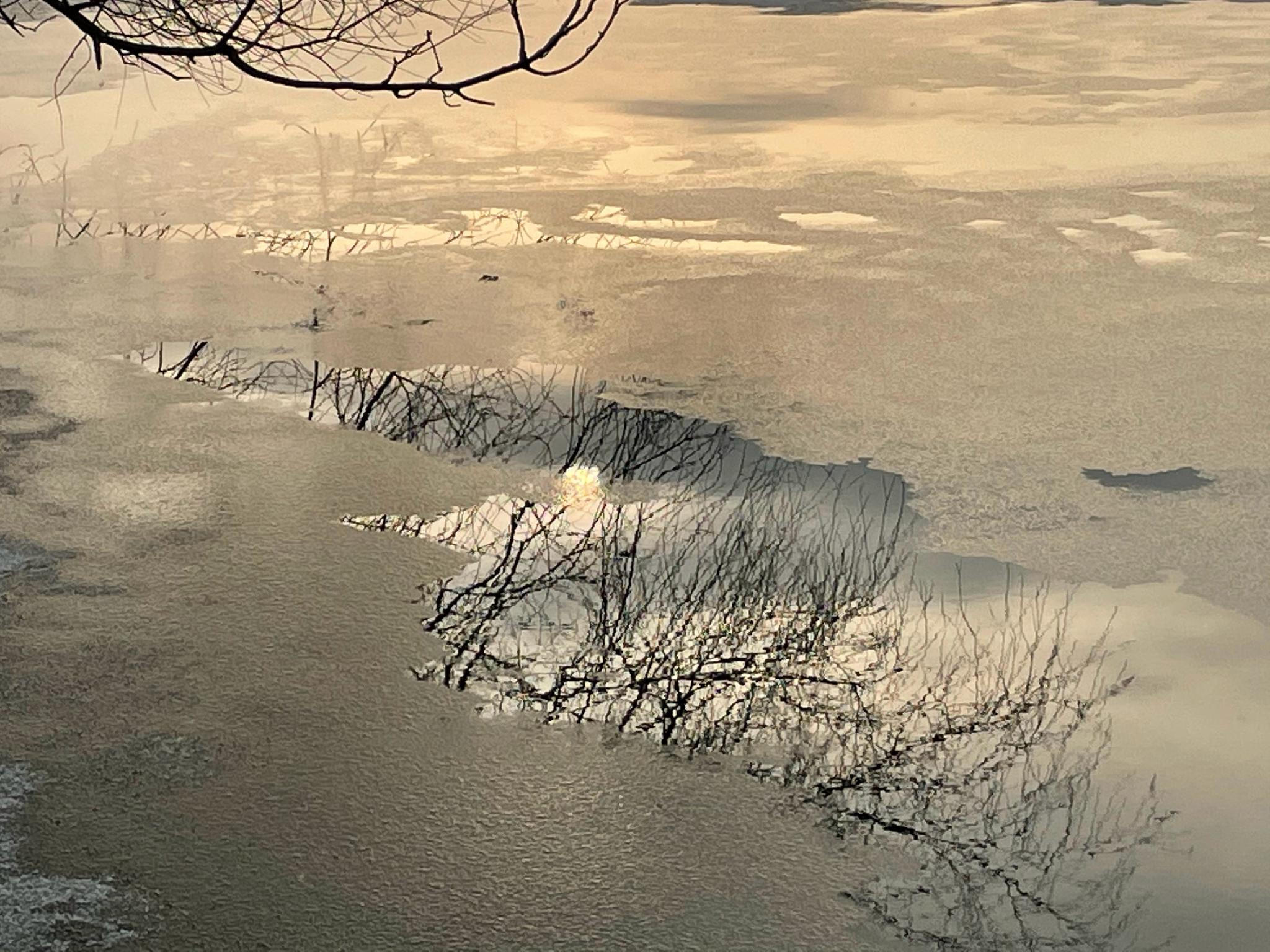 晨练时留恋雪中风景,一动一静之间浮想联翩……
