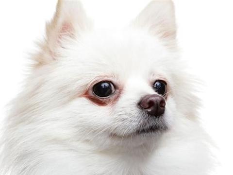 云南临沧某小区保安清理流浪狗,晒太阳金毛犬被清理谁的责任?