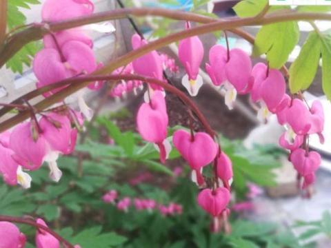 春季就养3种花,一年四季开不停,养护简单又漂亮!