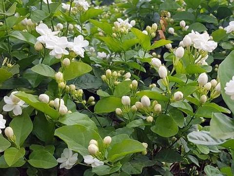 冬天养这6种花,一定要控水,不然黄叶又烂根,活不到春天!