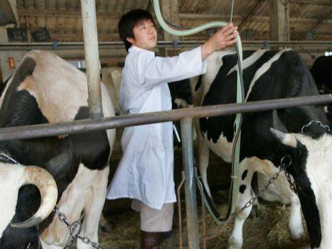 养殖户的福音:肉牛快速育肥三部曲,你也可以试试看!