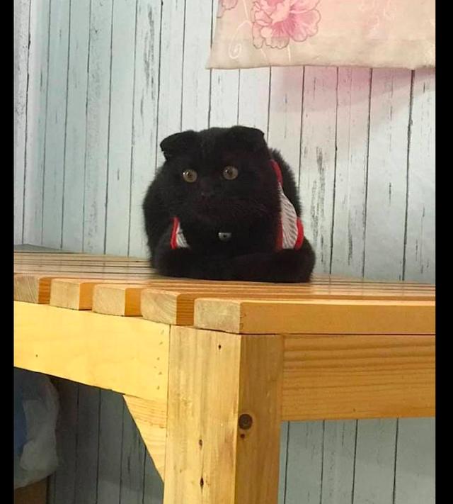 在桌子上有个黑方块,以为是顾客落下的包包,走近看才知是只猫!