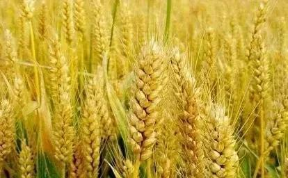 今年粮食价格逐渐上涨,对农民有哪些好处?