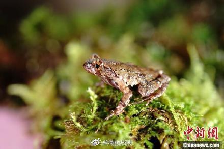 19日,浙江省丽水市生态环境局发布消息称,近日……
