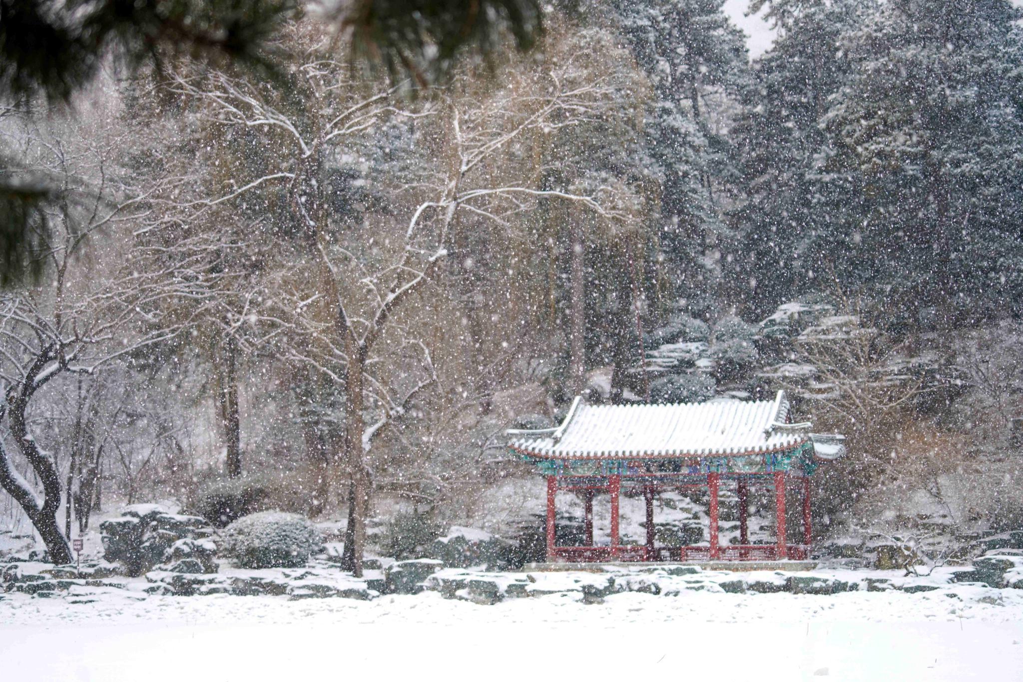 当皇家园林遇上飞雪……