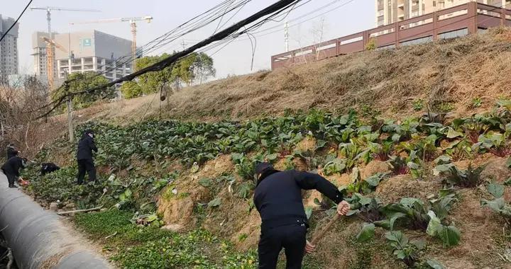 武昌城管整治违规菜地,为居民营造宜居环境