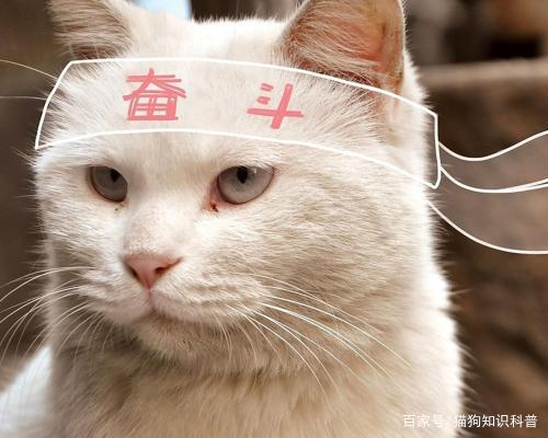 弗诺多:引起猫咪咳嗽原因