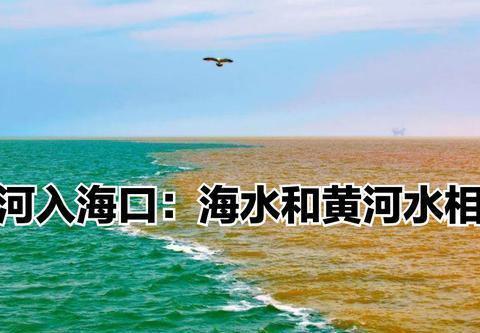 山东省有山是泰山、圣人是孔子,那一水是黄河还是泉水,理由?
