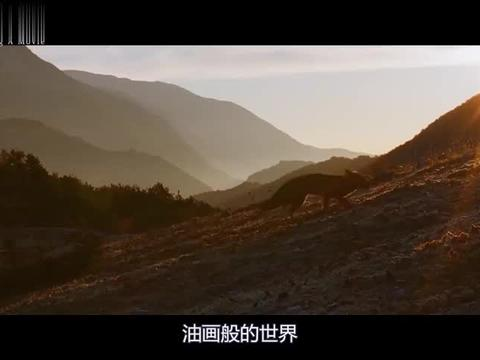 《狐狸与我》:一部超级治愈的冷门佳片,原来这才是真正的爱!