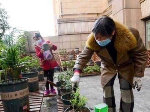 """随迁老人求交友,""""共享花园""""让会种菜的他们成了社区""""红人"""""""
