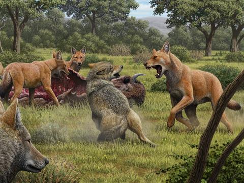 """DNA分析显示,《权利的游戏》中的""""冰原狼"""",其实不是""""狼"""""""