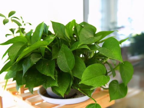 养花基础知识:通风条件的好坏对植物有什么影响?