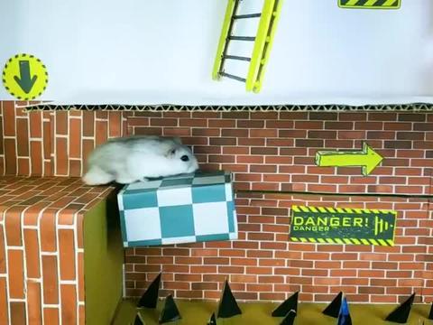 仓鼠偷盗宝石,被警察围追堵截,结果太惨了!