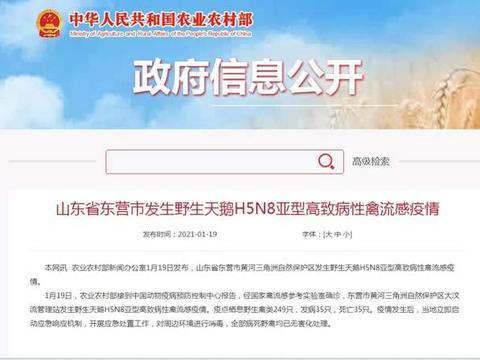 东营市发生野生天鹅H5N8亚型高致病性禽流感疫情