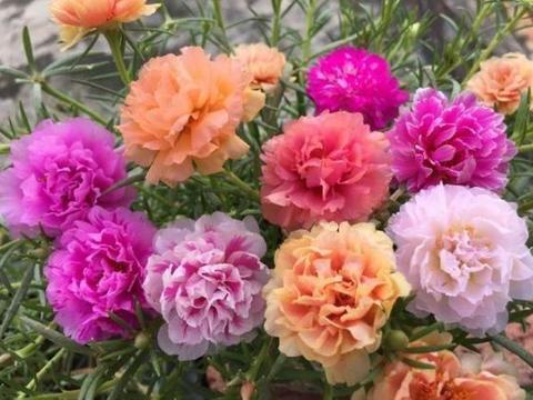 4种花是花中劳模,花开不停,开花量大,花开枝繁叶茂