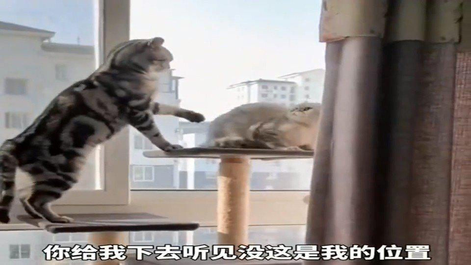 当座位被占,猫咪这个气势无敌了!