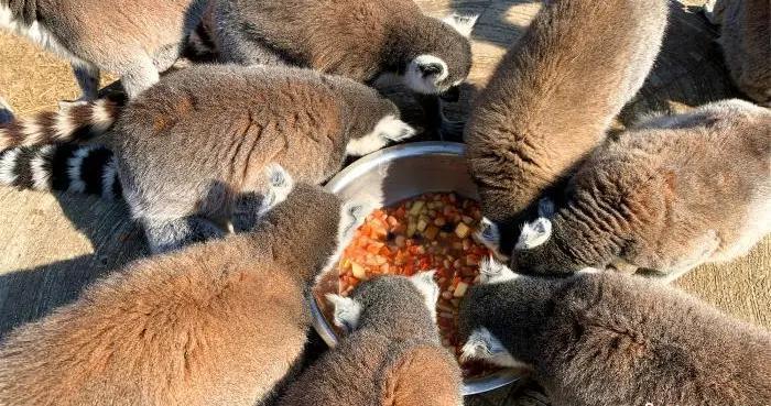 """杭州野生动物世界为动物特制""""腊八大餐"""""""