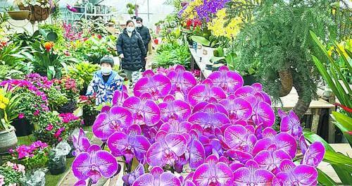 市民在花卉市场选购鲜花