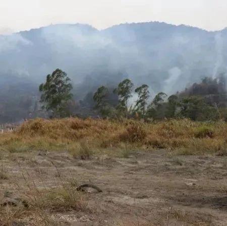 河源2名小学生玩火,致数十亩山林被烧毁!不追究刑责