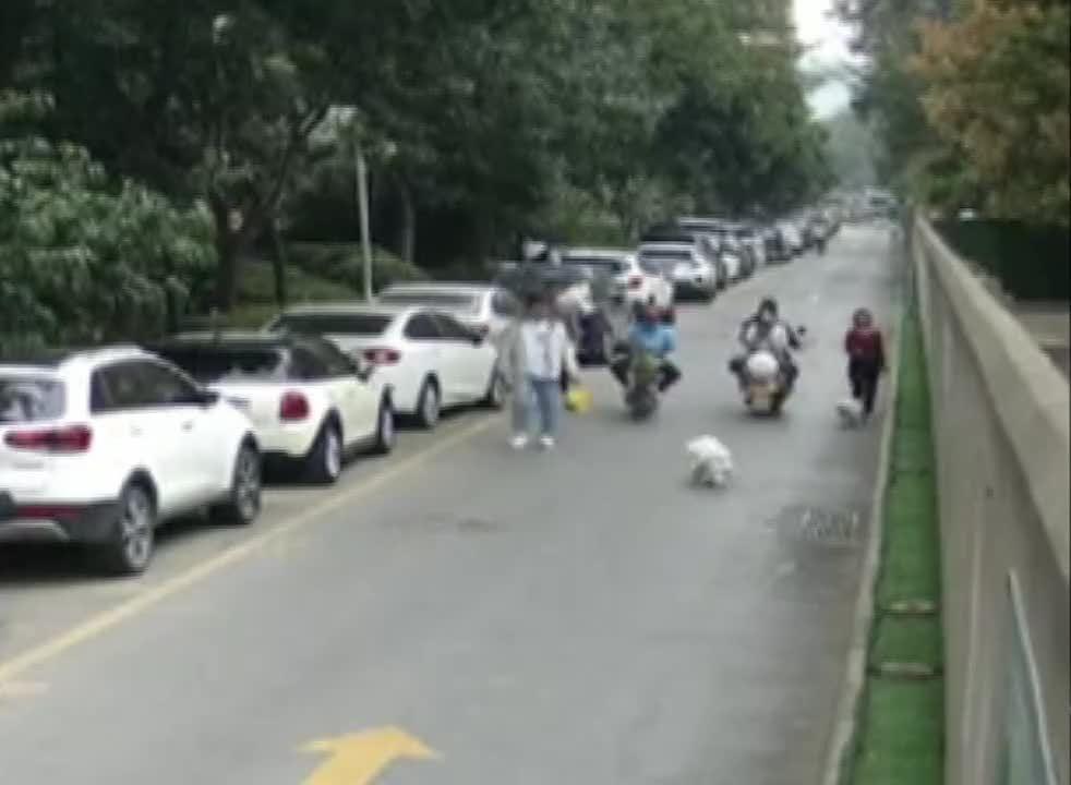 郑州 狗狗乱跑吓住人 竟然还要跟狗道歉?