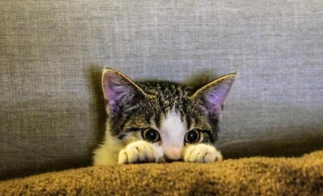 你真的了解猫咪吗?关于猫咪的5个冷知识,全知道才叫了解