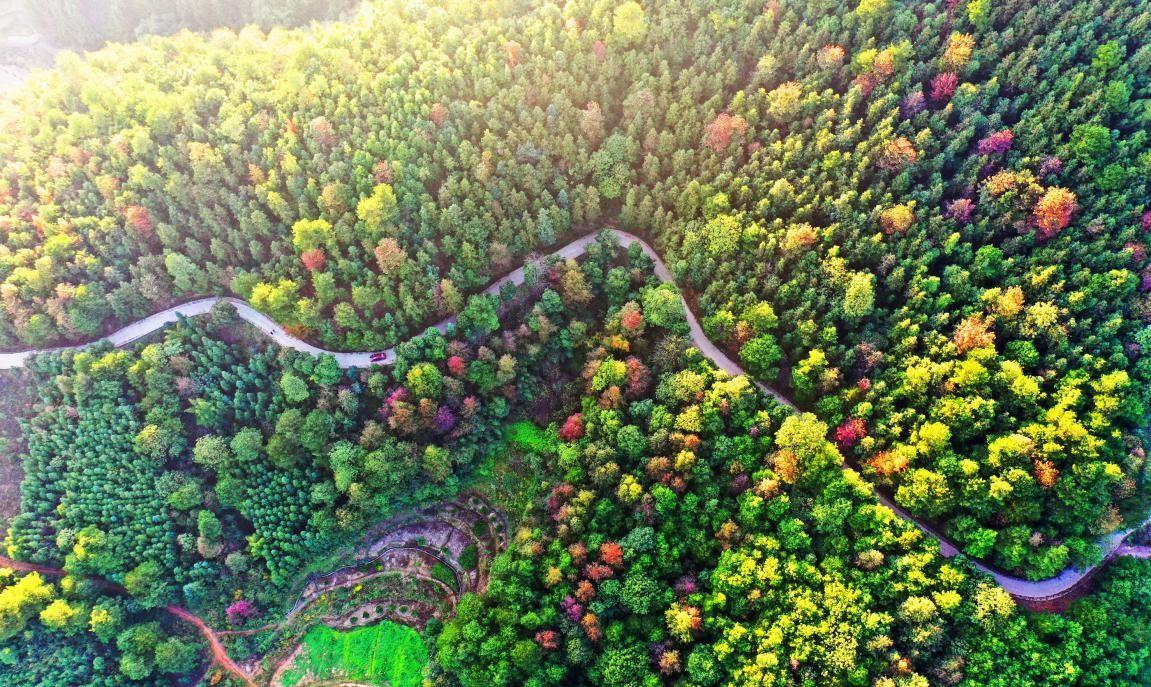 中国森林植被总碳储量已达92亿吨