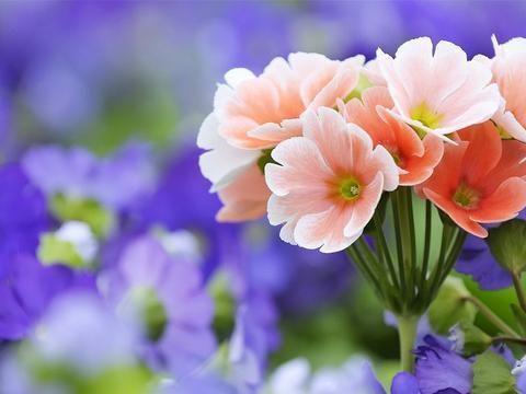 再过不久,桃花正旺,爱情来临,三大星座,被良人表白,找到真爱