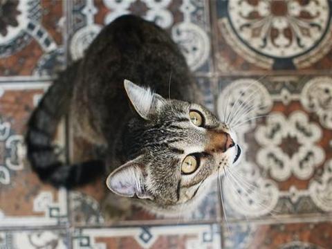 主人隔离21天回家之后,发现自家猫咪不仅拆了家,还胖成球了