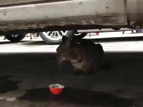 最开始以为它只是一只饿了的流浪猫,它是想我帮帮它的孩子