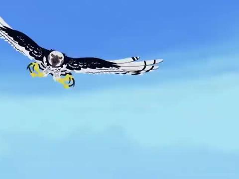 老鹰逍遥抓蜥蜴,蜥蜴动作非常的快,老鹰就是抓不住