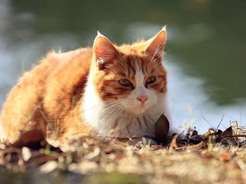 小伙早上骑车上班,却发现车上一只流浪猫在睡觉,他的做法感人