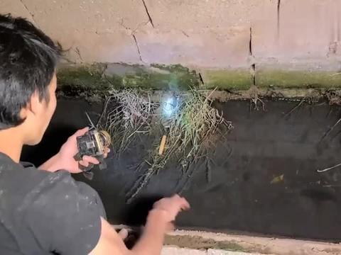 黄鳝生活在几百万条虫子里面,不长这么肥都不行 ,大家觉得呢?