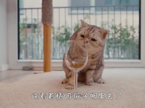 铲屎官把猫粮放酒杯里,喵星人能吃到吗?看完忍住别笑